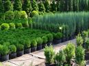 Широкий ассортимент растений