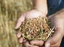 Очистка зерна: виды примесей и способы очистки