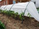 Выбор теплицы – залог хорошего урожая